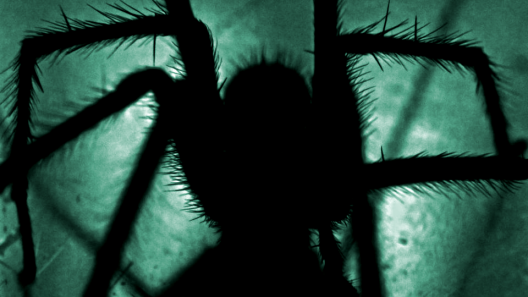 VR overcome fear of spiders
